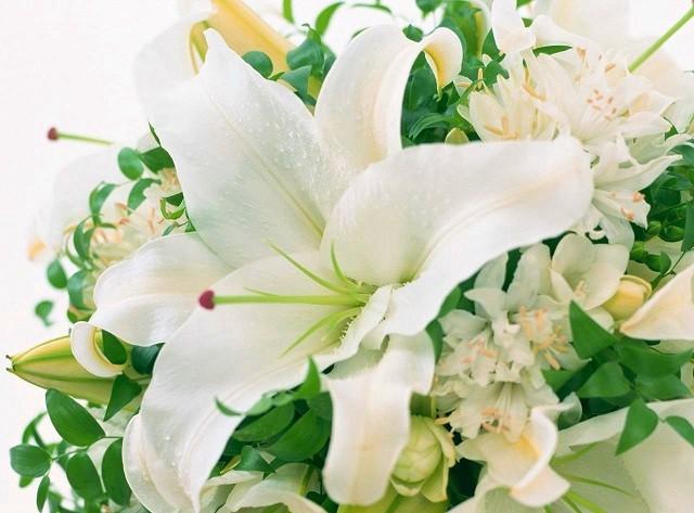 hinh anh hoa ly dep nhat 3