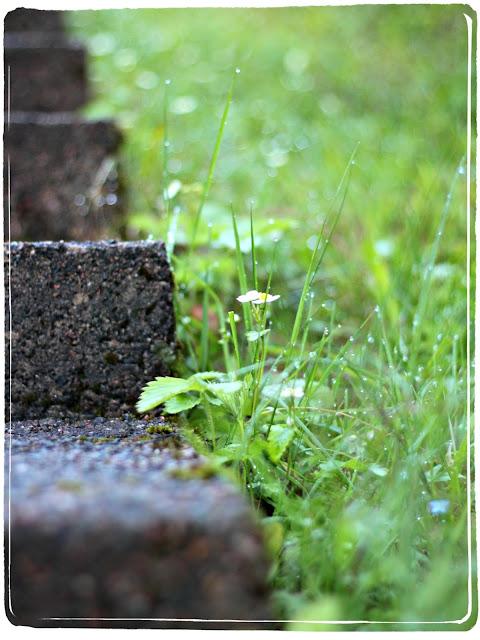 märkä ruoho