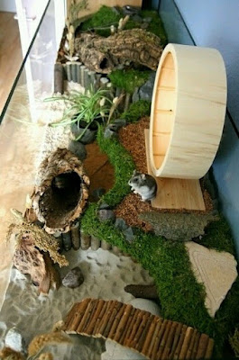 Fancy Dwarf Hamster Home