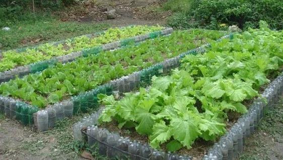 kebun sayur minimalis