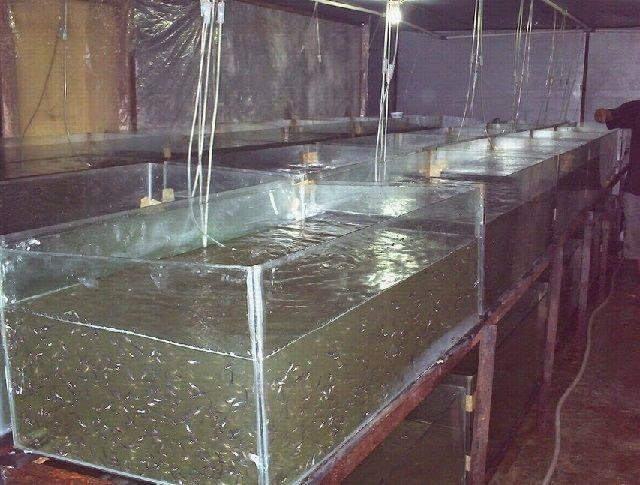 Bak Penampungan Air Bersih