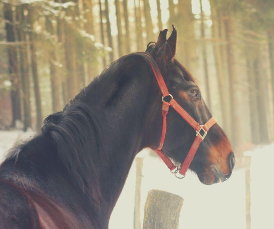 How Horse Riding Can Help You On Your Self-Care Journey | A new hobby can boost your confidence.