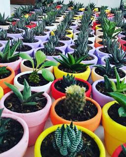 kaktus-dan-sukulen-lengkap.jpg