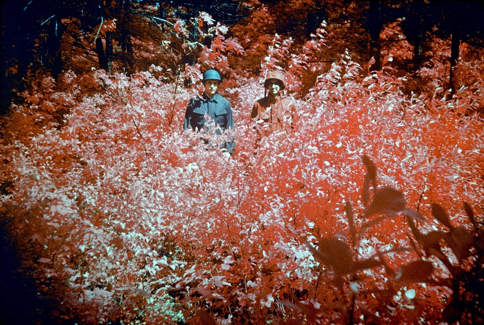 Infra-red camouflage, 1974.