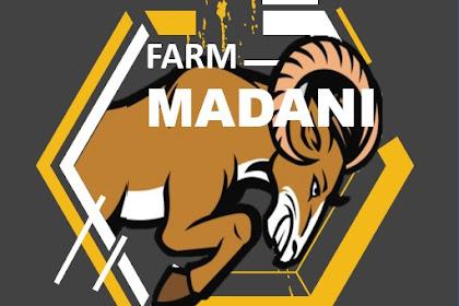 Madani Farm Jual Cempe Bibit Anak Domba Garut