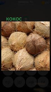 389 фото лежат несколько кокосов 16 уровень