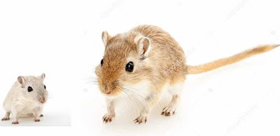 Rodents picture