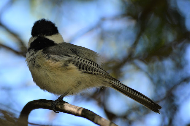 Wild Wednesday: Ottawa Valley Wild Bird Care Centre Paws For Reaction