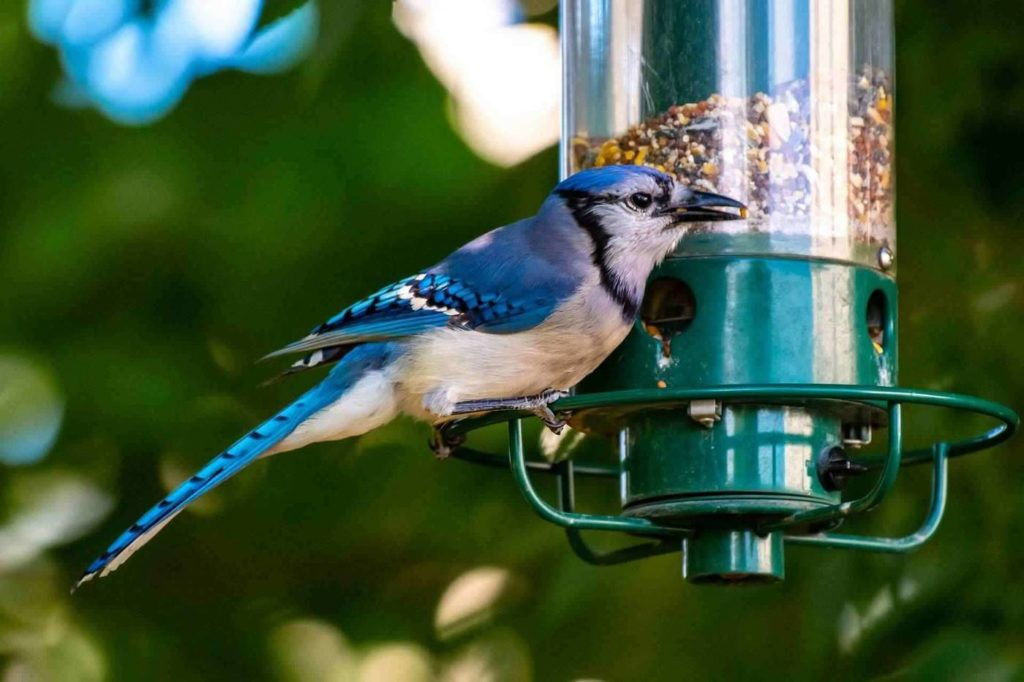 A Comprehensive Review of the 6 Best Bird Feeders for Blue Jays