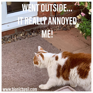 Angry Amber @BionicBasil® Bad Tempered Kitty - Went Outside It Really Annoyed Me