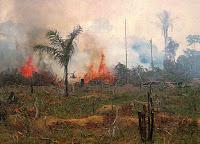 Brenning av regnskog, Brasil. Foto Nasa, fri bruk.