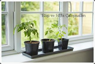 bitki yetiştirme 1