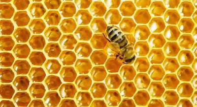 افضل أنواع العسل للعلاج