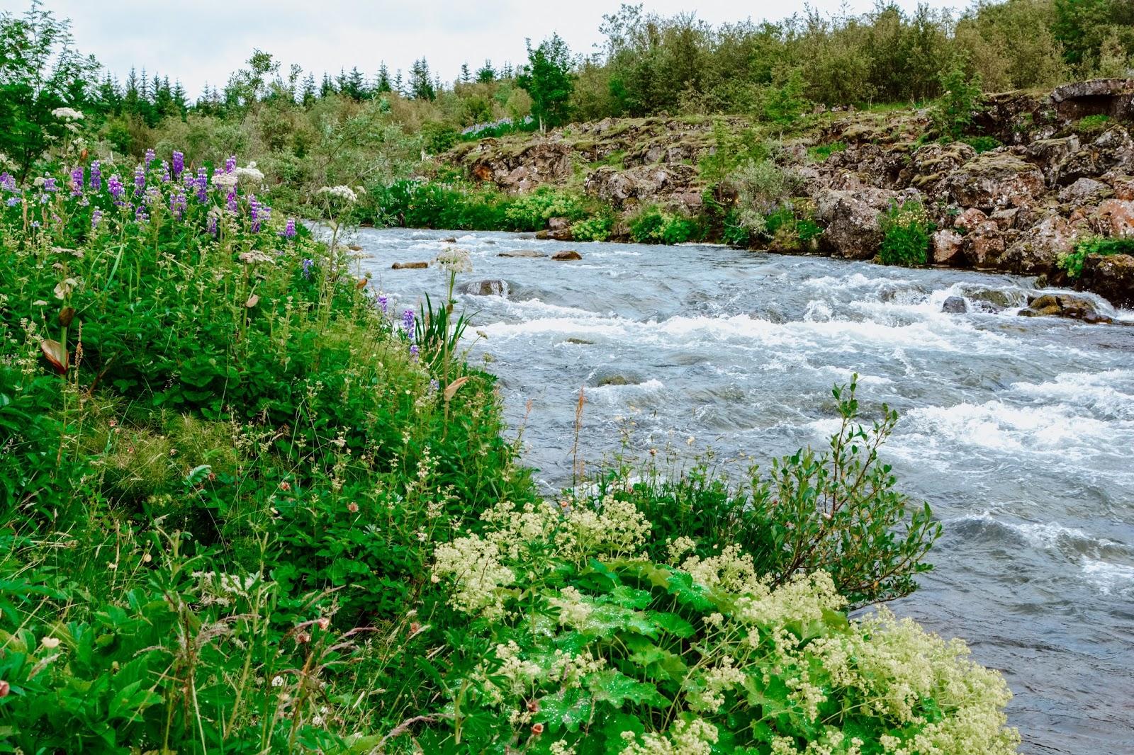 Iceland Stream