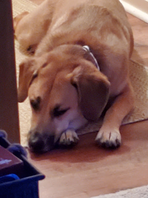 Dog pouting