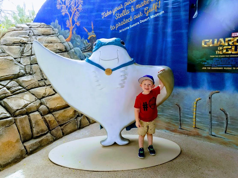 sonora desert museum sting ray bay