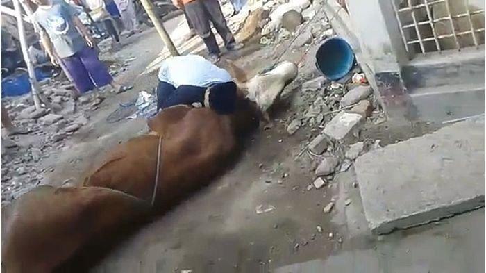 Meninggal saat akan menyembelih sapi kurban