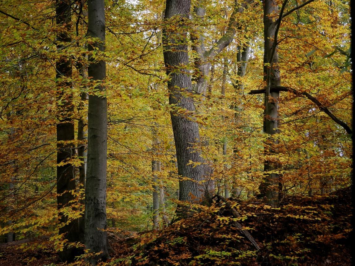 Bergedorf Sachsenwald