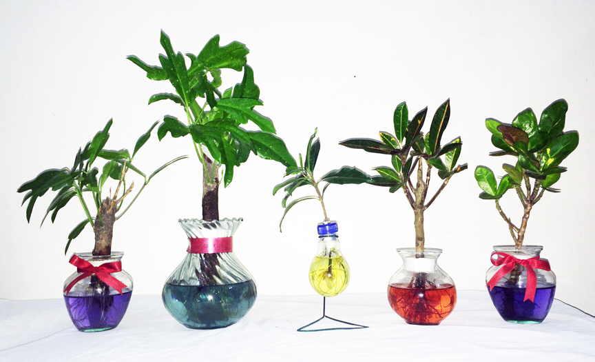 Bonsai Tree Care Tap Water Or Bottled Bonsai Tree