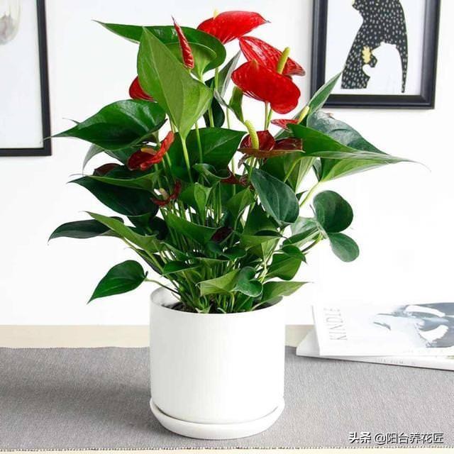3種植物好養易活!招財又旺運!有錢人都喜歡養