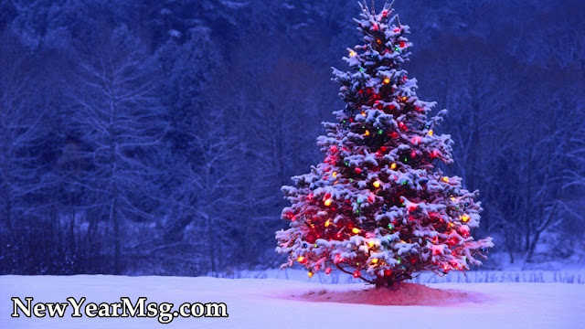 Best Decorated Christmas Tree 2017 Images with Snowfall