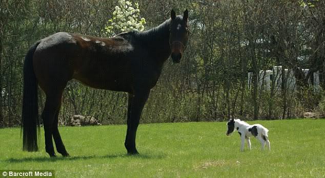 Kuda Unik