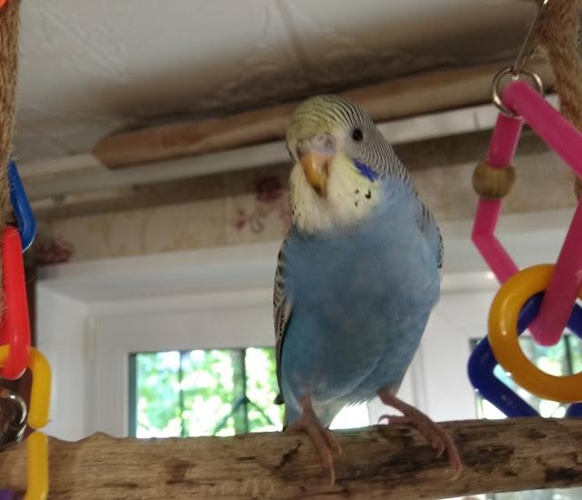 Россиянин заживо сжёг двух попугаев, чтобы отомстить жене после ссоры