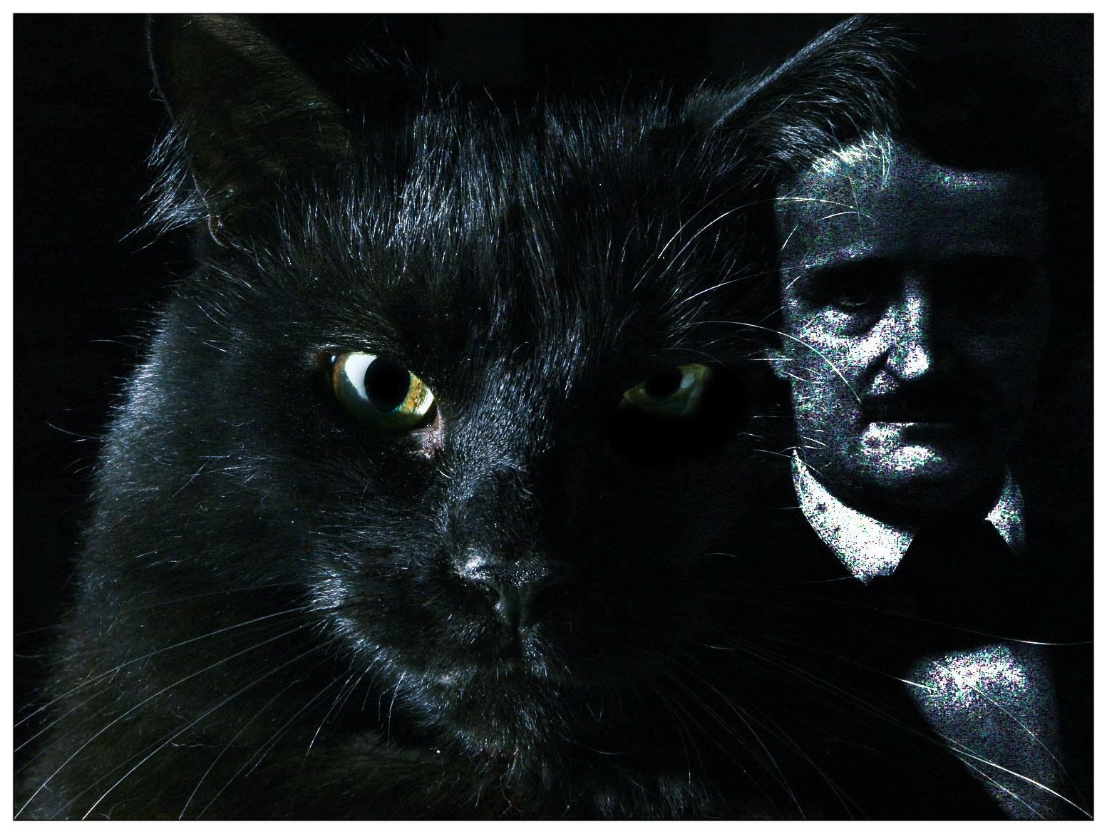 Ayuda felina el gato negro cuento - El gato negro decoracion ...