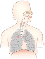what is throat cancer,symptoms of throat cancer,how check throat cancer