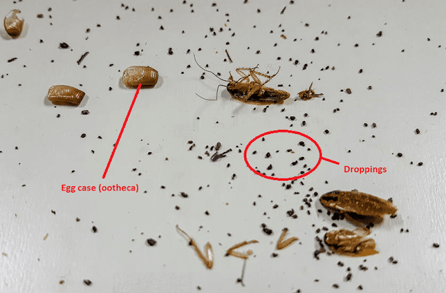 what-does-cockroach-poop-look-like