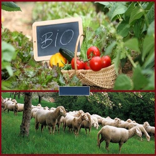 Αποτέλεσμα εικόνας για κτηνοτροφία και για την γεωργία