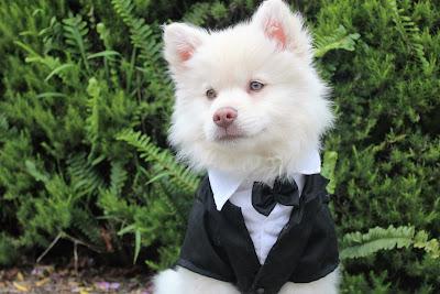 Perro vestido para una boda