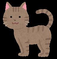 猫の模様のイラスト(キジトラ)
