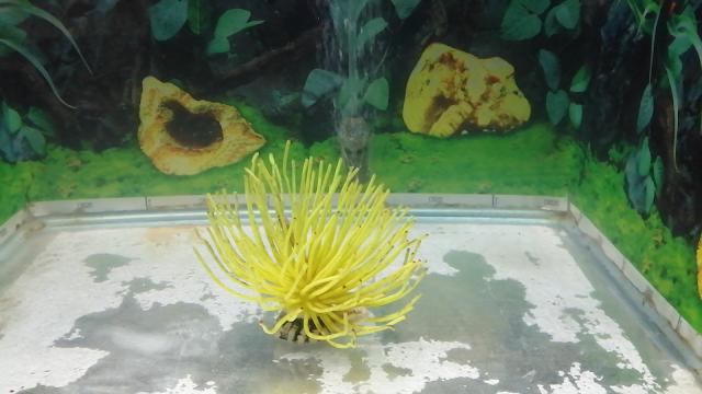 marine radiant fish aquarium