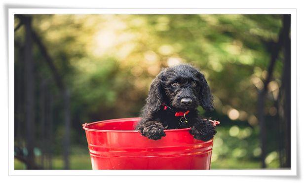 dog puppy potty training