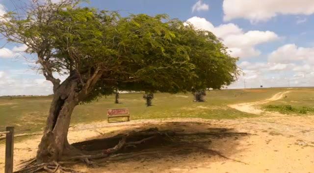 Vídeo: Árvore Penteada é alvo de vandalismo no litoral do Piauí