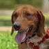 Samy ο καλύτερος σκυλάκος για οικογένεια
