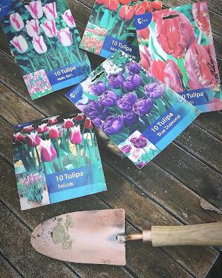 Viisi tulppaaninsipulipakettia ja istutuslapio ulkopöydällä