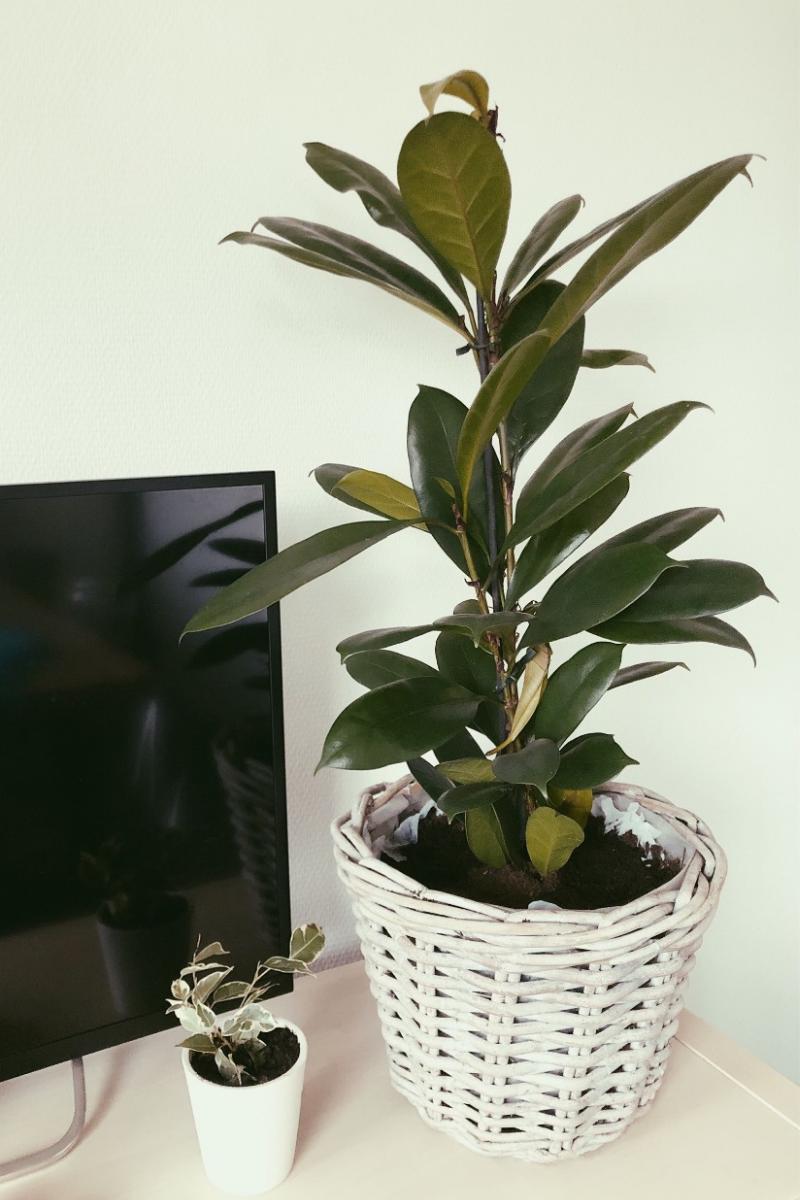 Haal meer groen in huis met PlantRebelz. Kamerplanten en stekjes uit hen eigen kassen