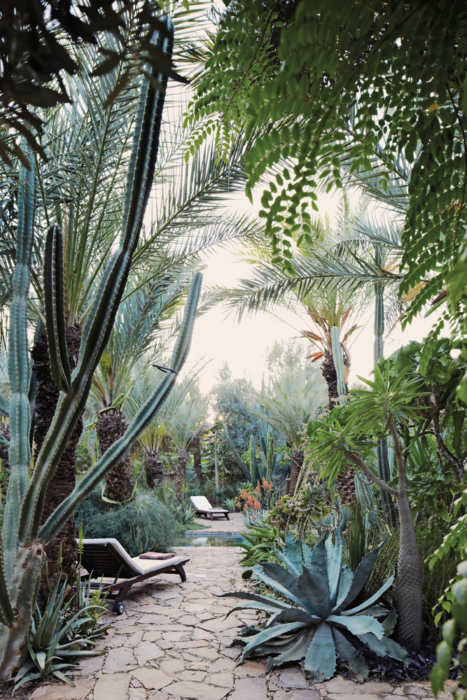 jungle fever in Morocco/design addict mom