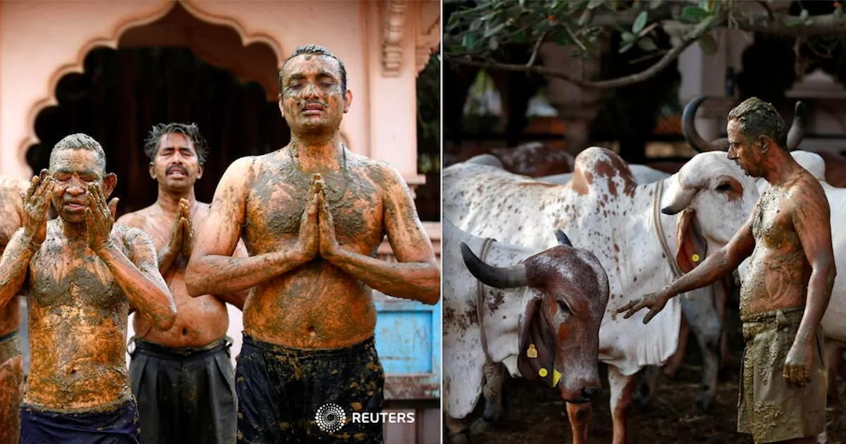 Doctors In India Warn Against Using Cow Dung To Cure CoViD-19