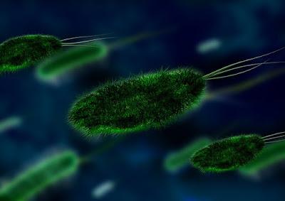 Pengertian, Klasifikasi Eubacteria Serta Perbedaannya