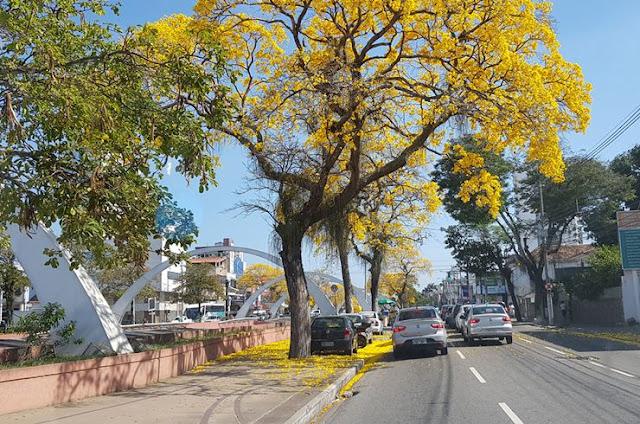 http://vnoticia.com.br/noticia/3147-os-ipes-amarelos-de-campos