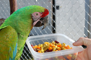 Pakan Biji-Bijian Burung atau pakan Nabati Burung Kicau