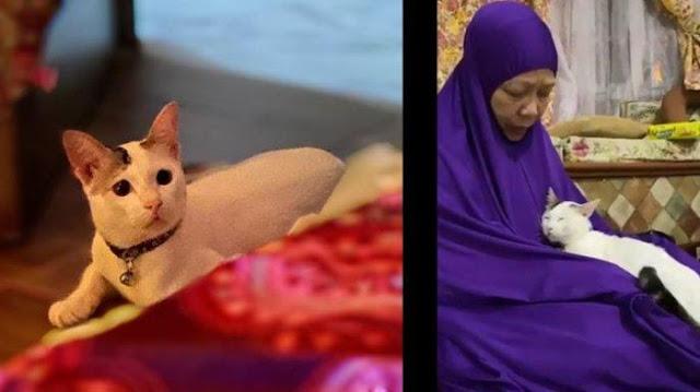 Kisah Nyata Gadis Pungut Kucing Jalanan, Perubahan Ini Terjadi kepada Ibunya yang Sakit Kanker