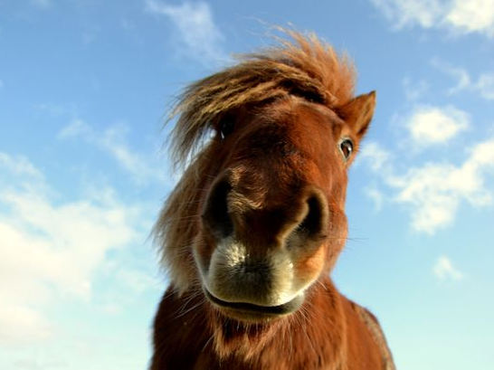 23 year old man sentenced for having s*x with a horse