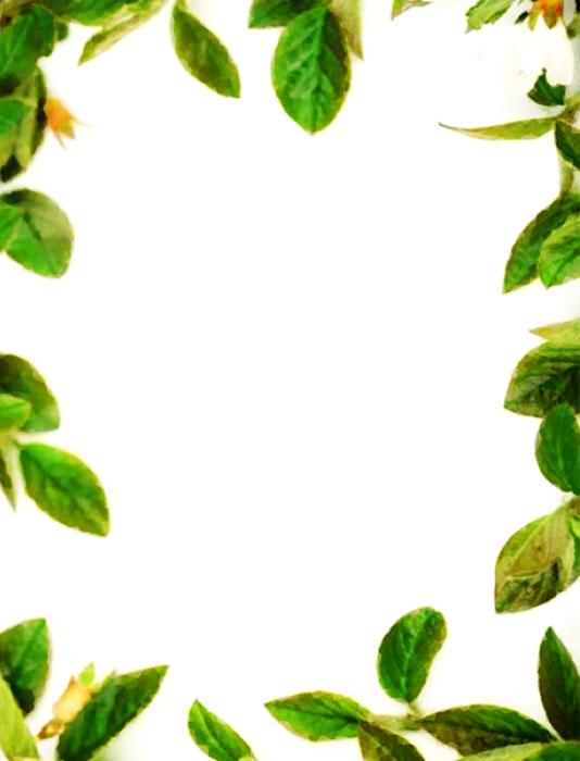 Bordes decorativos bordes decorativos de hojas para imprimir - Marcos para plantas ...