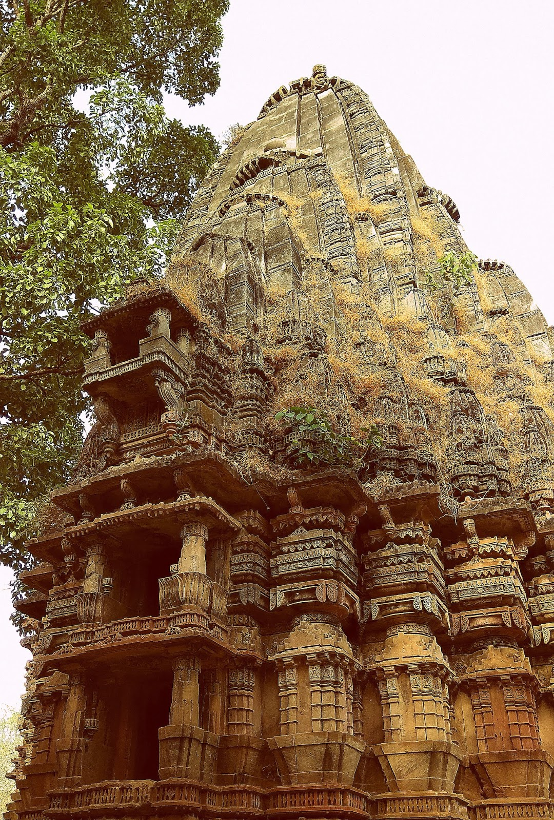 The lost Jain temples of Abhapuri (Polo Forest)