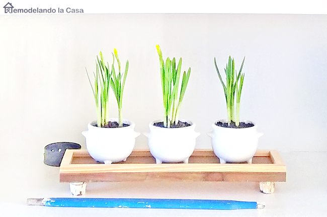 tulips in soup bowls a top wooden tray - rustic decor