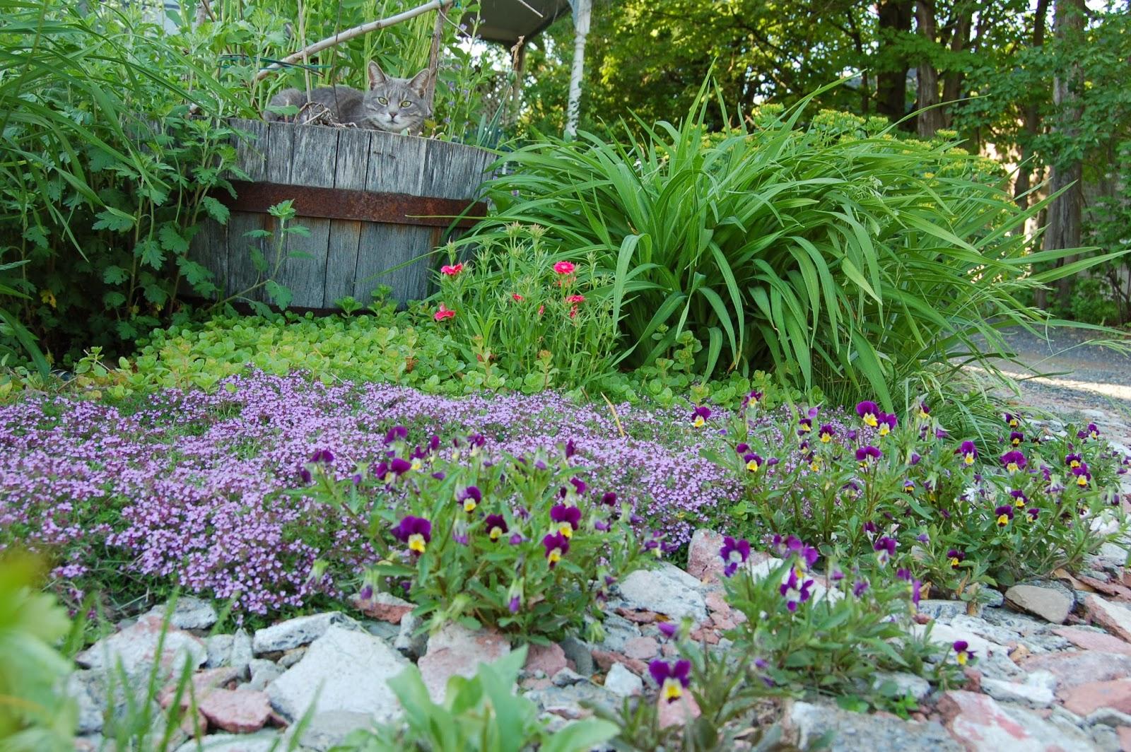 3 jardins au qu bec des plates bandes comestibles et. Black Bedroom Furniture Sets. Home Design Ideas